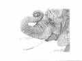 elephant_small